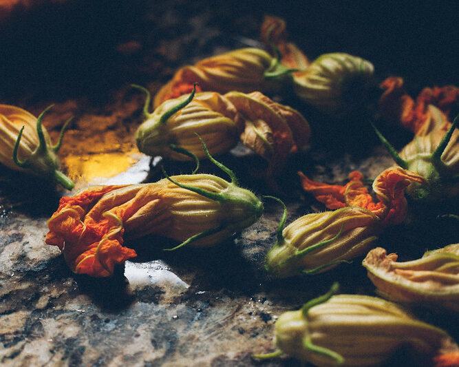 primavera flor de abobrinha